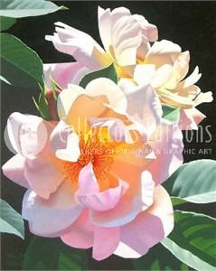 "Brian Davis Limited Edition Giclee on Canvas :""Sunlight Dance """