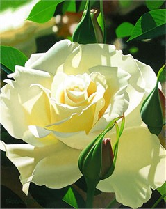 """Brian Davis Limited Edition Giclee on Canvas:""""Pale Yellow Beauty"""""""
