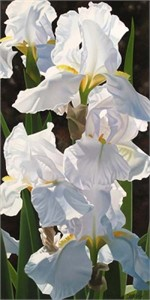 "Brian Davis Handsigned and Numbered Limited Edition Giclee on Canvas: ""Enchanting Irises"""