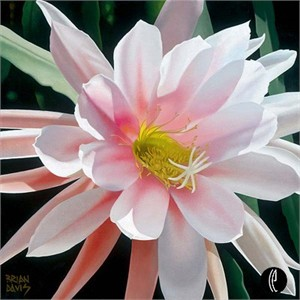 "Brian Davis Handsigned and Numbered Limited Edition Giclee on Canvas:""Blushing Beauty"""
