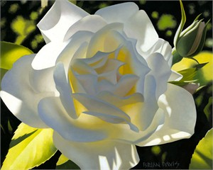 "Brian Davis Hand Signed and Numbered Limited Edition Giclee on Canvas:""Divine White Rose"""