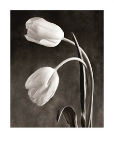 "Sondra Wampler Signed and Numbered Limited Edition Giclée on Crane Museo Paper:""Tulipa"""