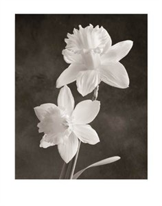 "Sondra Wampler Signed and Numbered Limited Edition Giclée on Paper:""Narcissus"""