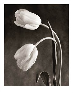"""Sondra Wampler Signed and Numbered Limited Edition Giclée on Paper:""""Tulipa"""""""