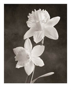 """Sondra Wampler Signed and Numbered Limited Edition Giclée on Paper:""""Narcissus"""""""