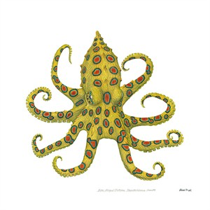 """Flick Ford Artist Signed and Numbered MasterWork™ Canvas Giclee:""""Blue-Ringed Octopus"""""""