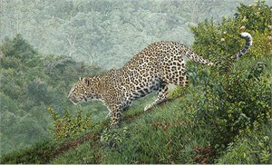 """Guy Combes Hand Signed and Numbered Limited Edition Canvas Giclee:""""Breaking Cover"""""""