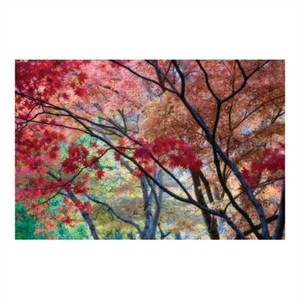 "Donald Paulson Signed and Numbered Limited Edition Custom Sized Gicl�e on Paper or Canvas: ""Lithia Park Fall Color II"""