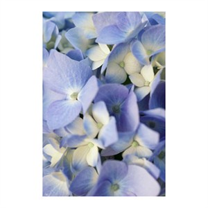 """Stacy Bass Signed and Numbered Limited Edition Custom Sized Gicl�e on Paper or Canvas: """"Pale Blue Hydrangea"""""""