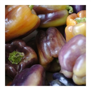 "Stacy Bass Signed and Numbered Limited Edition Custom Sized Gicl�e on Paper or Canvas: ""Purple Peppers"""