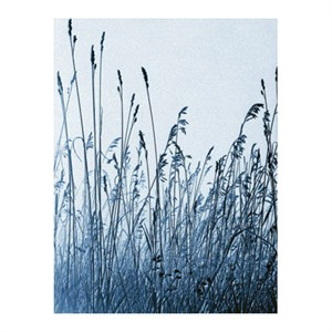 """Lilli Farrell Signed and Numbered Limited Edition Custom Sized Gicl�e on Paper or Canvas: """"Pastoral Gesture"""""""