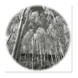 """Ken Paul Signed and Numbered Limited Edition Custom Sized Gicl�e on Paper or Canvas: """"Sunlit Forest"""""""