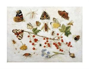 "Jan Van Kessel Fine Art Open Edition Giclée:""Butterflies, Moths and Other Insects"""