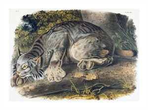 "John James Audubon Fine Art Open Edition Giclée:""Canada Lynx"""