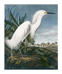 "John James Audubon Fine Art Open Edition Giclée:""Snowy Heron"""