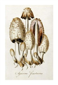 "William Curtis Fine Art Open Edition Giclée:""Egg Mushroom"""