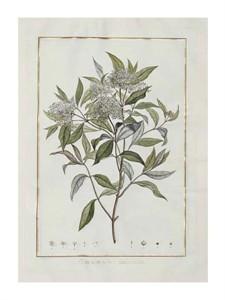 """Charles-Louis L'Heritier de Brutelle Fine Art Open Edition Giclée:""""Cornus"""""""