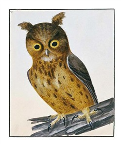 "William Lewin Fine Art Open Edition Giclée:""Owl"""