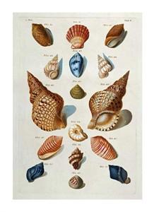 "Franz Michael Regenfuss Fine Art Open Edition Giclée:""A Selection of Seashells"""