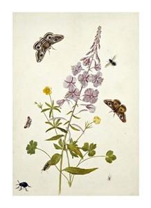 "Thomas Robins Jr. Fine Art Open Edition Giclée:""Rosebay Willowherb and Buttercups"""