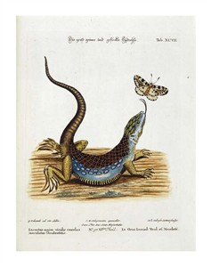 "Johann Michael Seligman Fine Art Open Edition Giclée:""Lizard Chasing a Butterfly"""