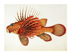 "John Whitchurch Bennett Fine Art Open Edition Giclée:""Fishes Found on the Coast of Ceylon"""