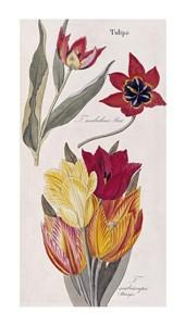 "David Nathaniel Dietrich Fine Art Open Edition Giclée:""Tulips - Flora Universalis"""