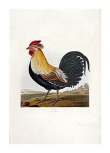 """Robert Havell Fine Art Open Edition Giclée:""""Cock"""""""