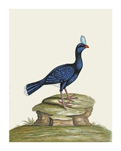 "William Hayes Fine Art Open Edition Giclée:""A Male Curhew"""