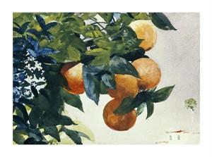 "Winslow Homer Fine Art Open Edition Giclée:""Oranges on a Branch"""