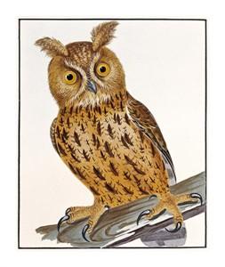 """William Lewin Fine Art Open Edition Giclée:""""Owl"""""""