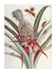 "J Mulder Fine Art Open Edition Giclée:""Pineapple (Ananas) with Surinam Insects"""