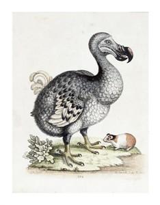 "Frederick P. Nodder Fine Art Open Edition Giclée:""The Dodo"""