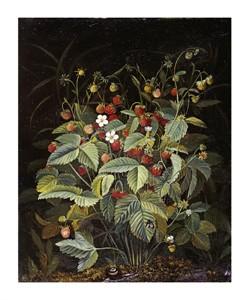 """Otto Diderich Ottesen Fine Art Open Edition Giclée:""""Wild Strawberries"""""""