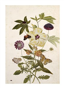 "Thomas Robins Jr. Fine Art Open Edition Giclée:""Milkweed, Poppy and Hibiscus"""