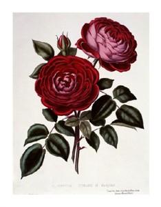 "Henry Curtis Fine Art Open Edition Giclée:""H Perpetual, Standard of Marengo"""