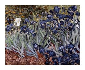 """Vincent Van Gogh Fine Art Open Edition Giclée:""""Irises"""""""