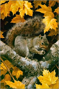 "Carl Brenders Hand Signed and Numbered Limited Edition Canvas Giclee: ""Golden Season - Gray Squirrel"""
