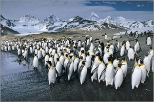 "Anthony Cook Hand Signed and Numbered Limited Edition Canvas Giclee: ""King Penguins - Antarctic Abstract"""