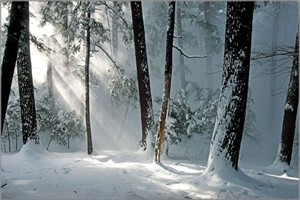 "Anthony Cook Hand Signed and Numbered Limited Edition Canvas Giclee: ""Winter Awakening"""