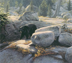 "Stephen Lyman Hand Numbered Limited Edition Gallery Wrap  Canvas Giclee:""Boulder Bruin"""