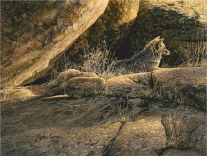 "Stephen Lyman Limited Edition Fine Art SmallWorks™ Giclée Canvas:""Coyote Afternoon"""