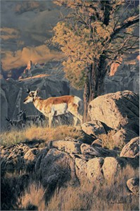 "Rod Frederick Handsigned and Numbered Limited Edition Canvas Giclee:""On the Canyon Rim"""
