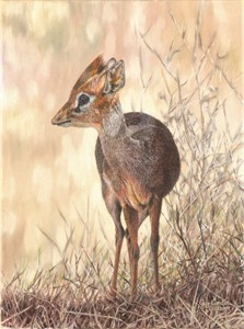 """Guy Combes Handsigned and Numbered Limited Edition Giclée Canvas:""""Dik-Dik"""""""
