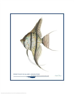 "Flick Ford Open Edition Giclée Print on Paper:""Peruvian Scalare Angel Fish"""