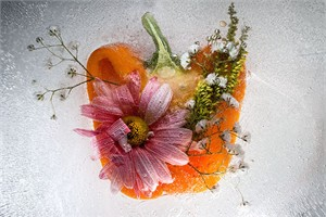 """Mo Devlin Open Edition Gallery Wrapped  Fine Art Canvas Giclée:""""Petals on Pepper"""""""