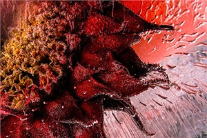"""Mo Devlin Open Edition Gallery Wrapped  Fine Art Canvas Giclée:""""Devilish Red"""""""