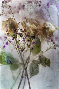 "Mo Devlin Open Edition Gallery Wrapped  Fine Art Canvas Giclée:""Rose with Purple Highlights"""