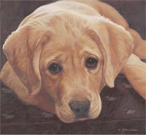 "John Weiss Limited Edition Print: ""Yellow Labrador"""