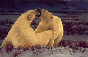 "Greg Beecham Handsigned & Numbered Limited Edition Print:""Polar Attraction """